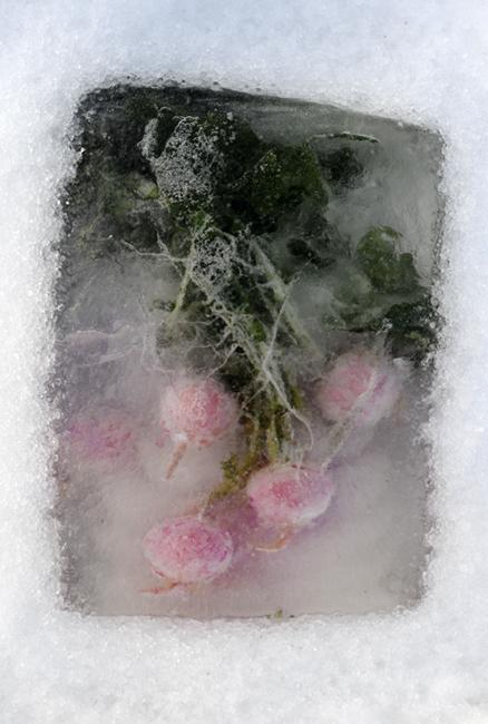 Frozen radishes