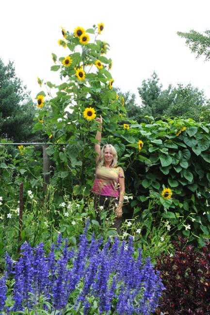 Garden in compost