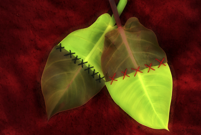 Philodendron leaves sewn
