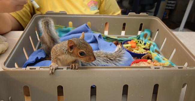 5 week old baby squirrels at Blue Ridge