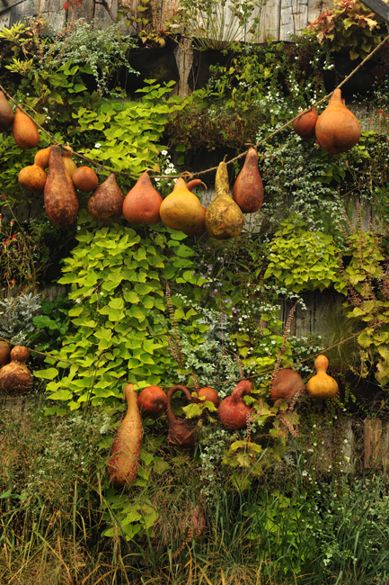 Fall gourd display at Terrain
