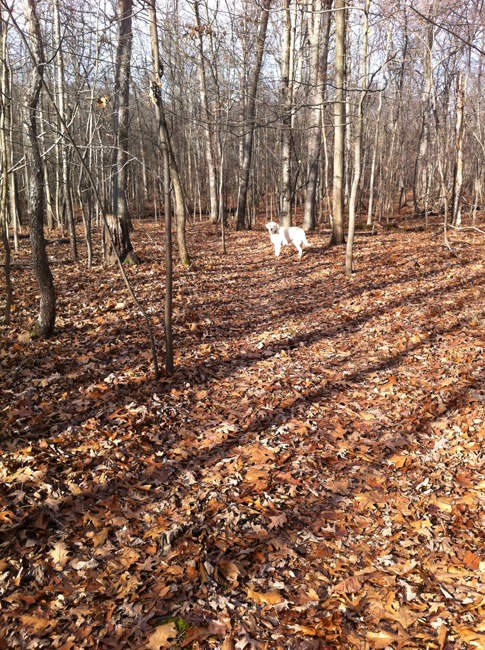 Duke in woods