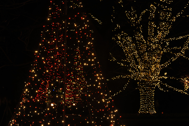 Christmas lights at Longwood Gardens 2