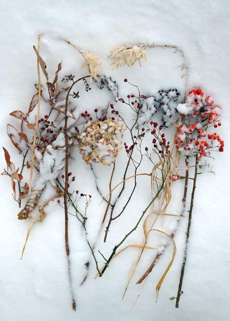 Garden series January