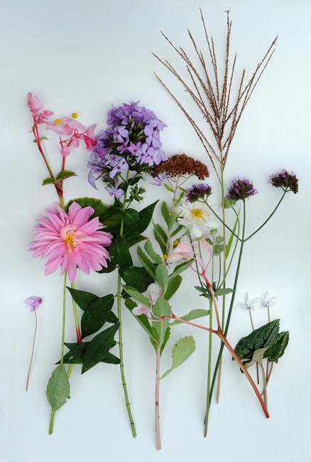 Garden Series October
