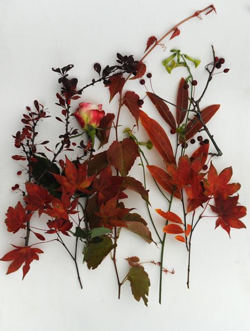 November flowers garden series