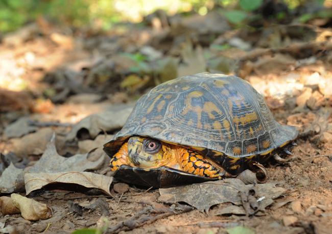 Mr healed turtle