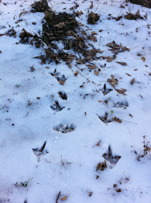 Frozen turkey tracks