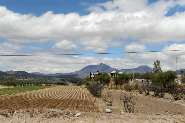 Agriculture in Hidalgo Mexico