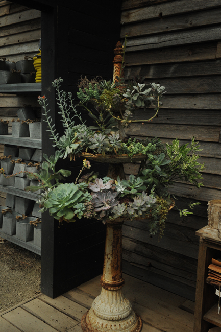 Container of succulents at Terrain