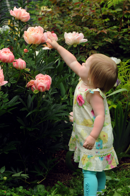 Felicity with peony 'Coral Charm' 1