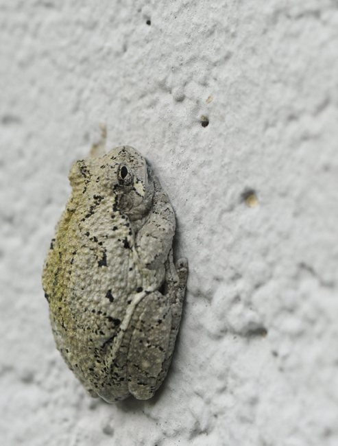 Frog on wall