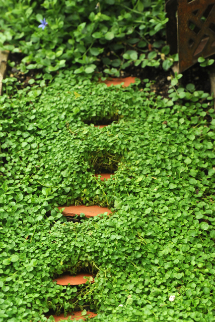 Miniature steps in miniature garden