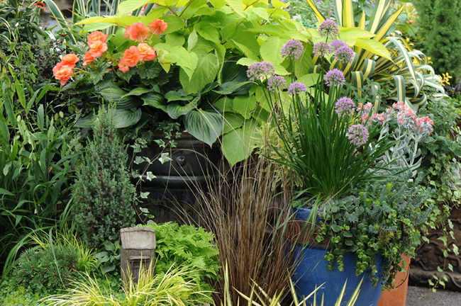 Containers in perennials at Merrifield