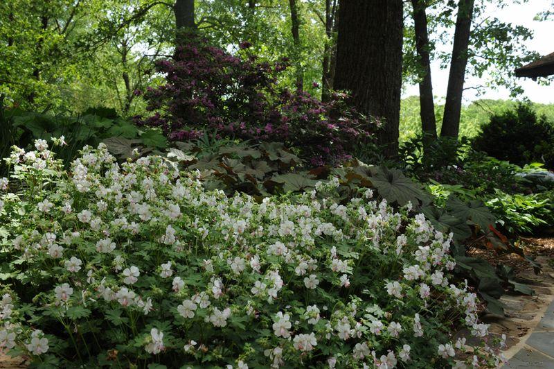 Margaret's shade garden
