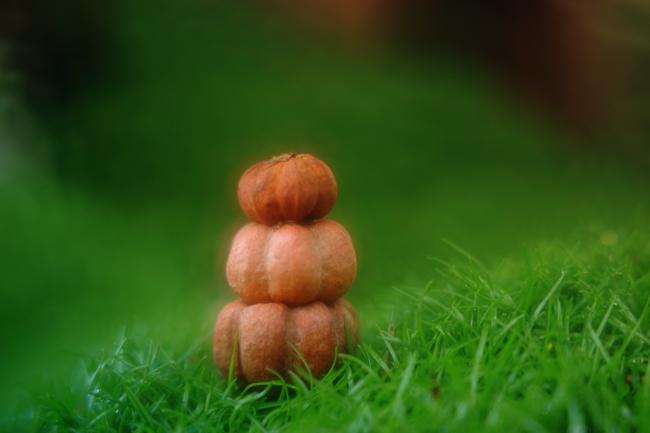 Stack of pumpkins in miniature garden