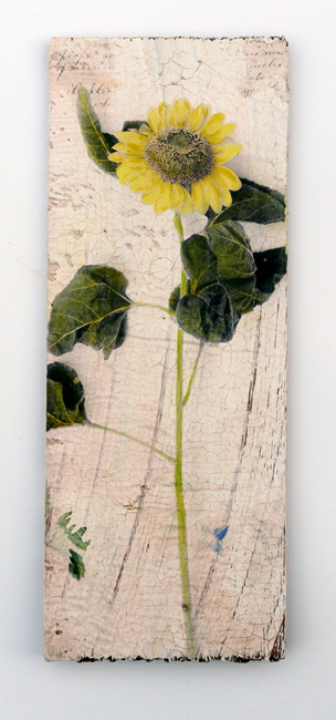 Sunflower as transfer painted