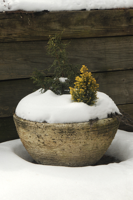 Miniature garden in snow in March