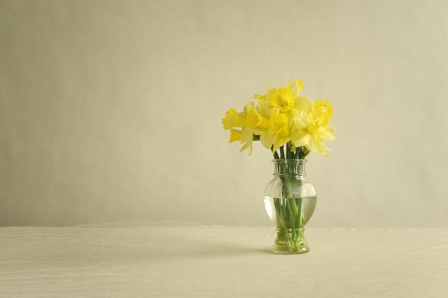 Daffodil 'Lemon Glow'