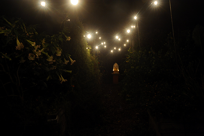 String lights in the raised beds