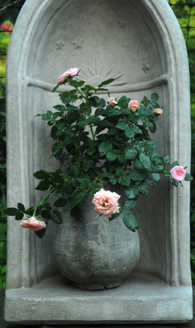 Miniature rose in cement pot in grotto