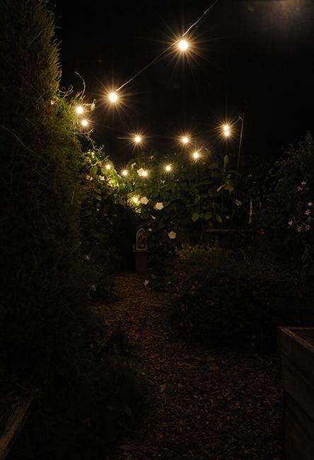 String lights in night garden