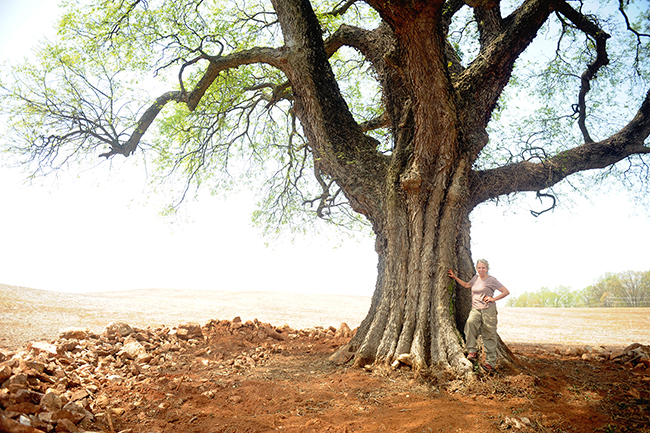 Celtis occidentalis or hackberry tree and Karen Rexrode