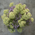 Flower arrangement with Allium 'Millenium' and Sedum 'Autumn Charm'