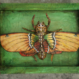 Assemblage death mask moth green orange