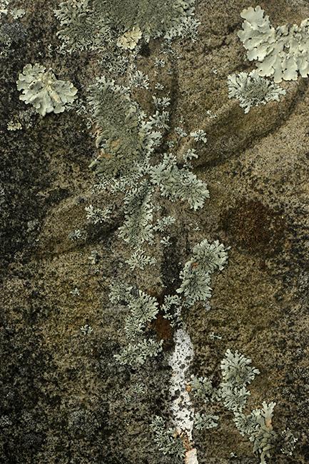 Headstone at Kimberling Lutheran Church lichen