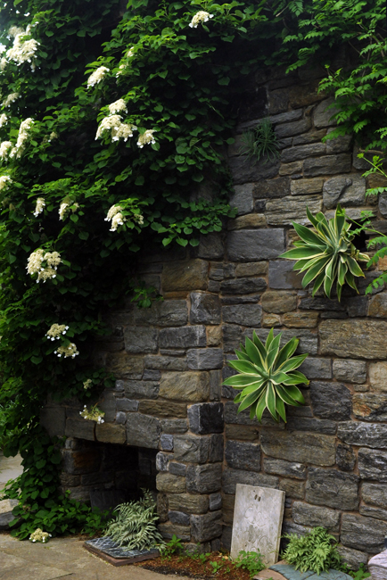 Agave and climbing hydrangea in ruins at Chanticleer