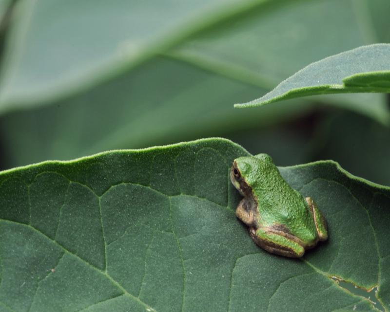 Small tree frog