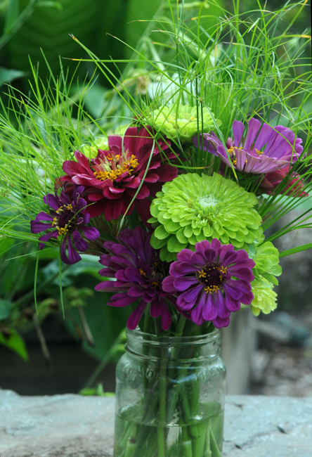 Benary zinnias in vase wine and purple