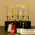 Daffodil Show in Upperville miniature daffodils