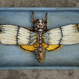 Assemblage death mask moth blue yellow
