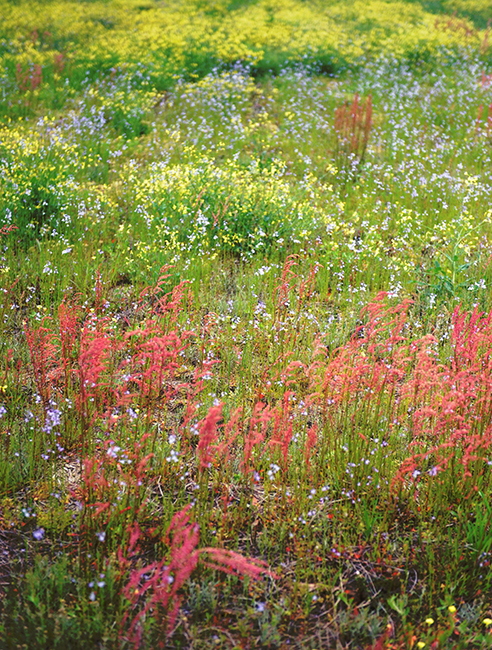 Meadow in South Carolina 1
