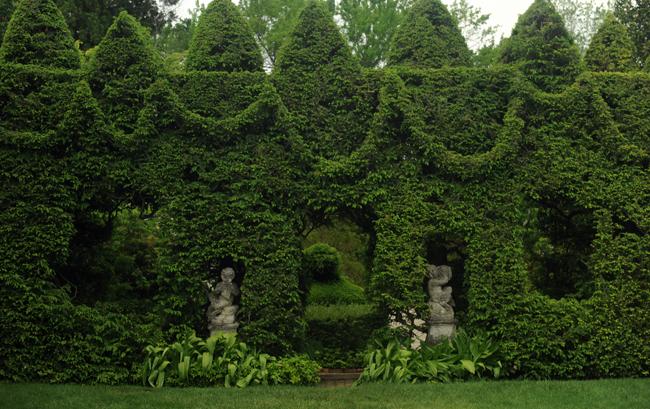 Ladew Gardens hemlock spires