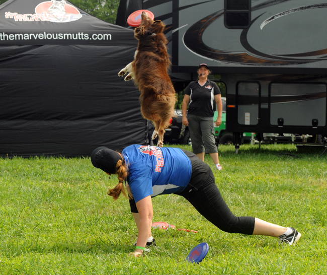 Dog catching frisbee at Marvelous Mutts show