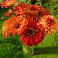 Flower arrangement in orange