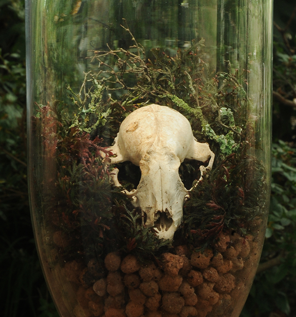 Racoon skull in terrarium cropped