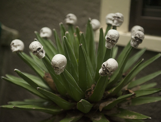 Skulls on agave at Jeff Minnich's garden