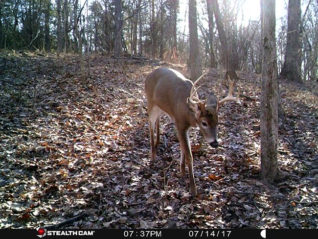 Eight point buck