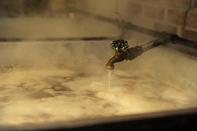 Maple sap flowing for syrup