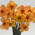 Daffodil 'Ambergate'