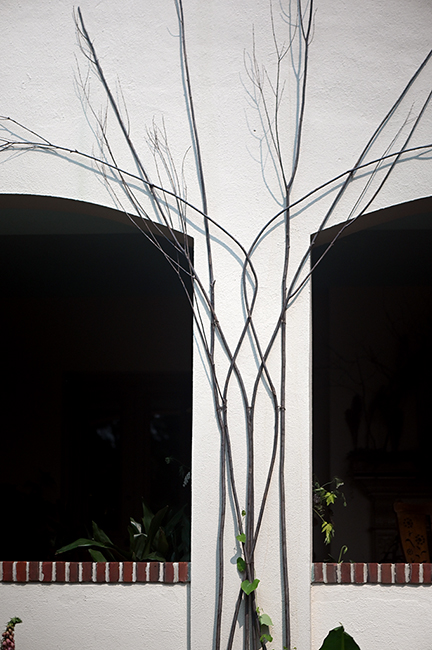 Tall branches for vine support top