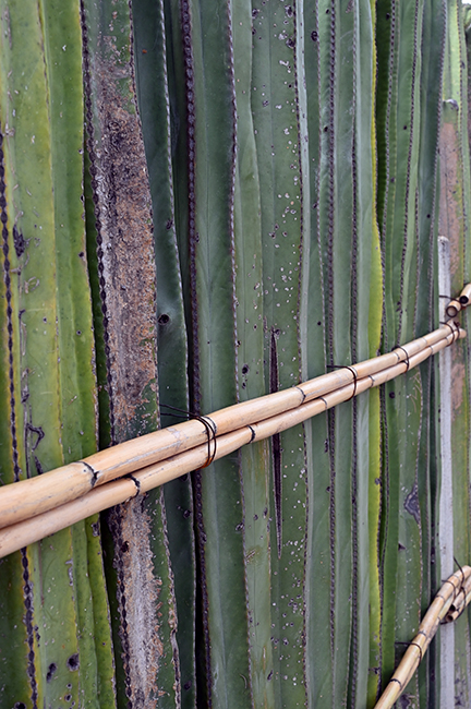 Cactus fence in Mitla