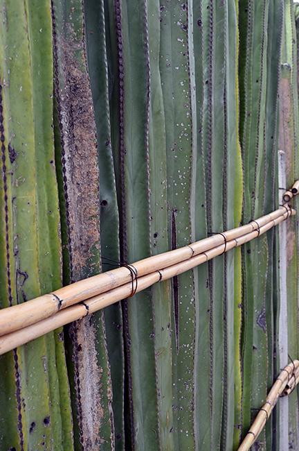 Cactus fence in Mitla