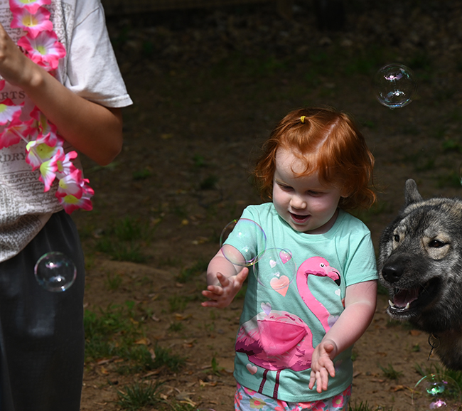 Juniper chasing bubbles with Scout 1