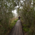 Boardwalk at Lake Barataria