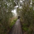 Boardwalk at Lake Barataria